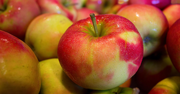 Photograph of a red and yellow Jonagold apple sitting on a pile of similar apples.