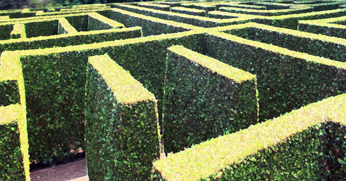 Fast healing wall bush 1200x628