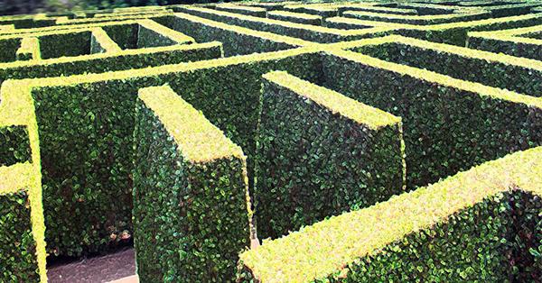 Fast healing wall bush 600x314