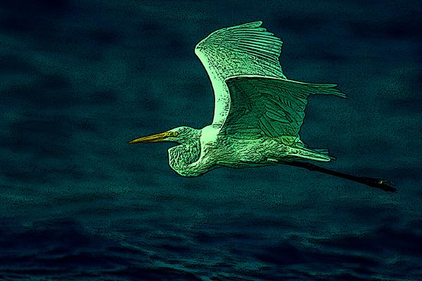Green Heron 3 600x400