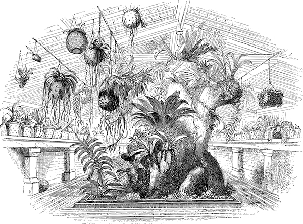 Greenhouse 600x443