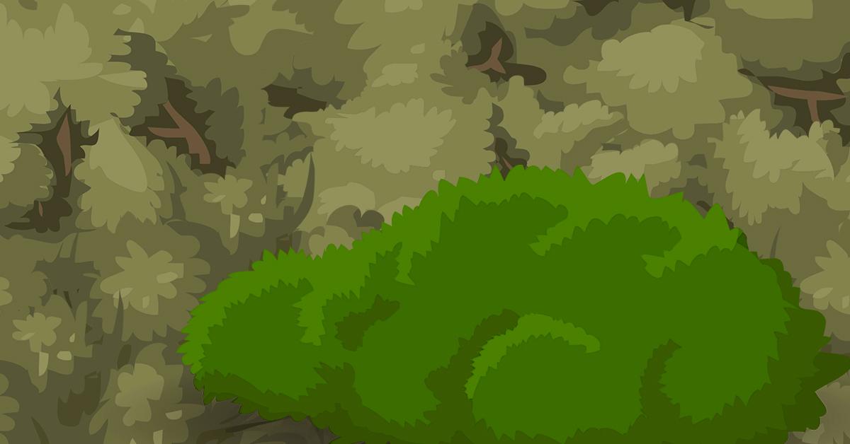 Guard bush brighter 1200x628