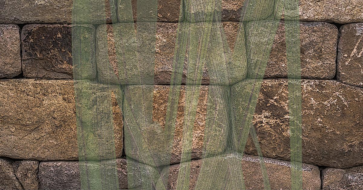 Invisible Grass 1200x628