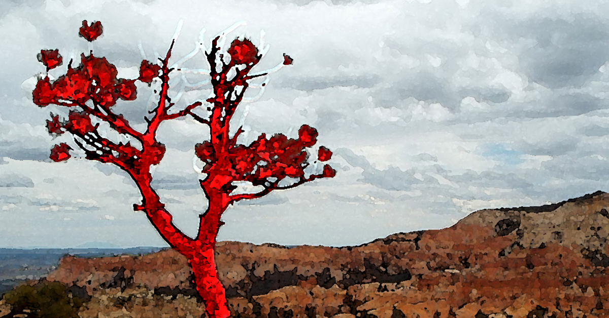Lava Pine cropped2 1200x628