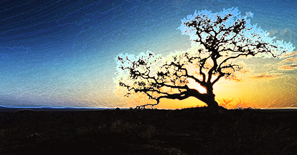 Tree of Eternal Sleep 600x314