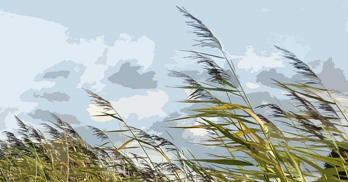 Wind Grass 1200x628