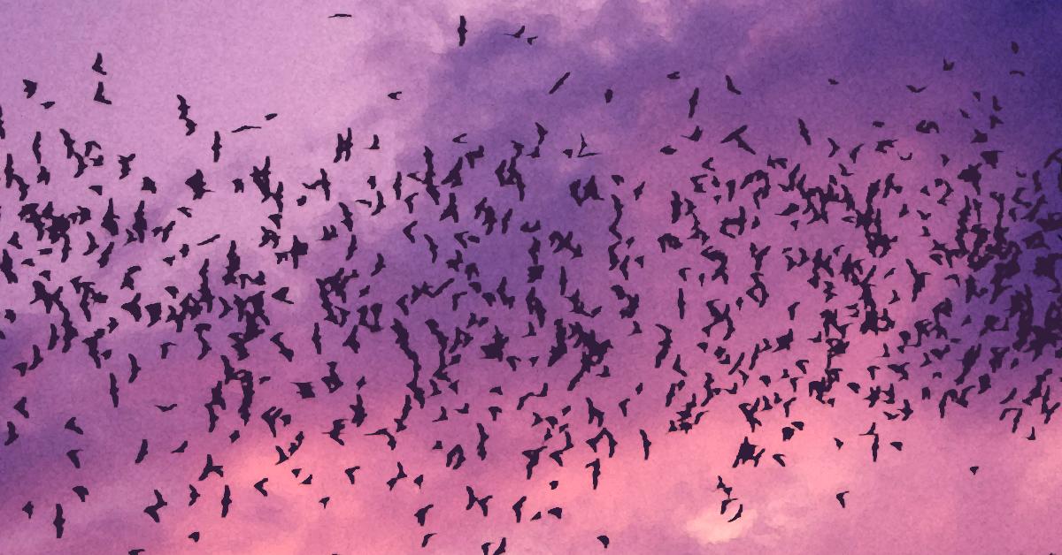 Bat Seed Bush purple 1200x628