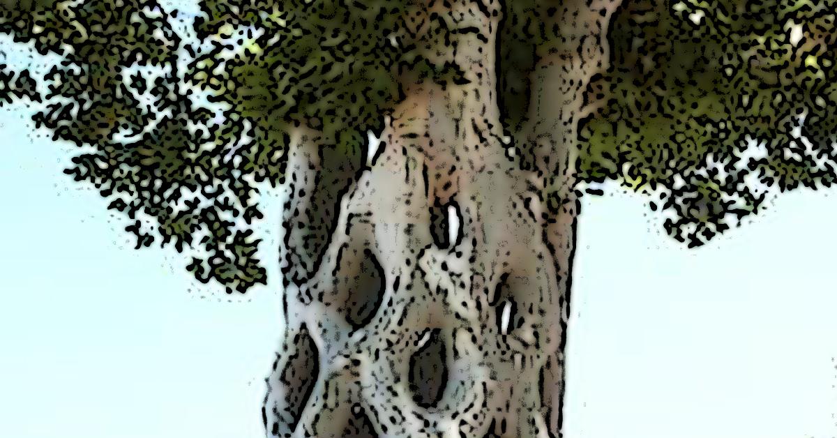 Blustering Tree 1200x628