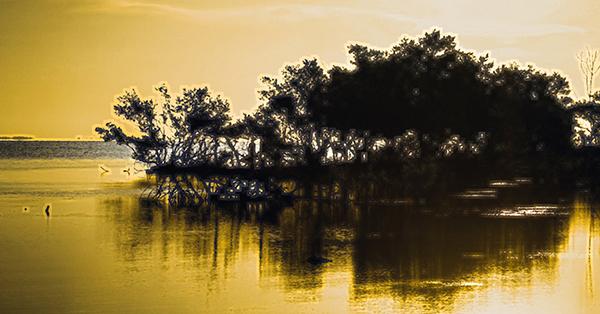 Floating Mangrove 600x314