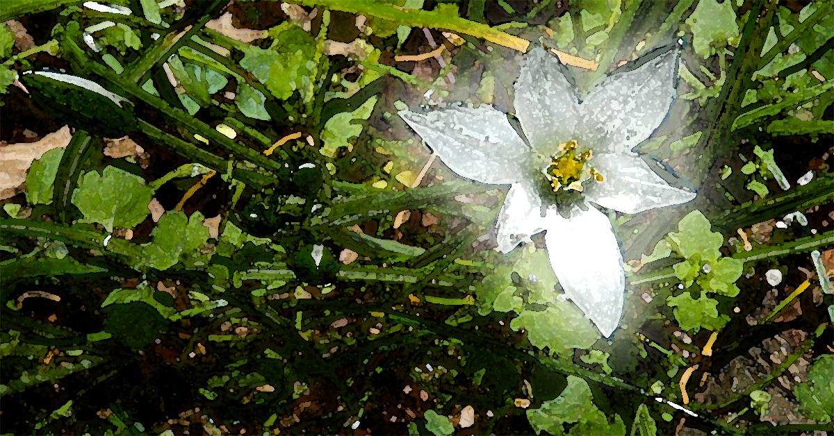 Fog Flower 1200x628