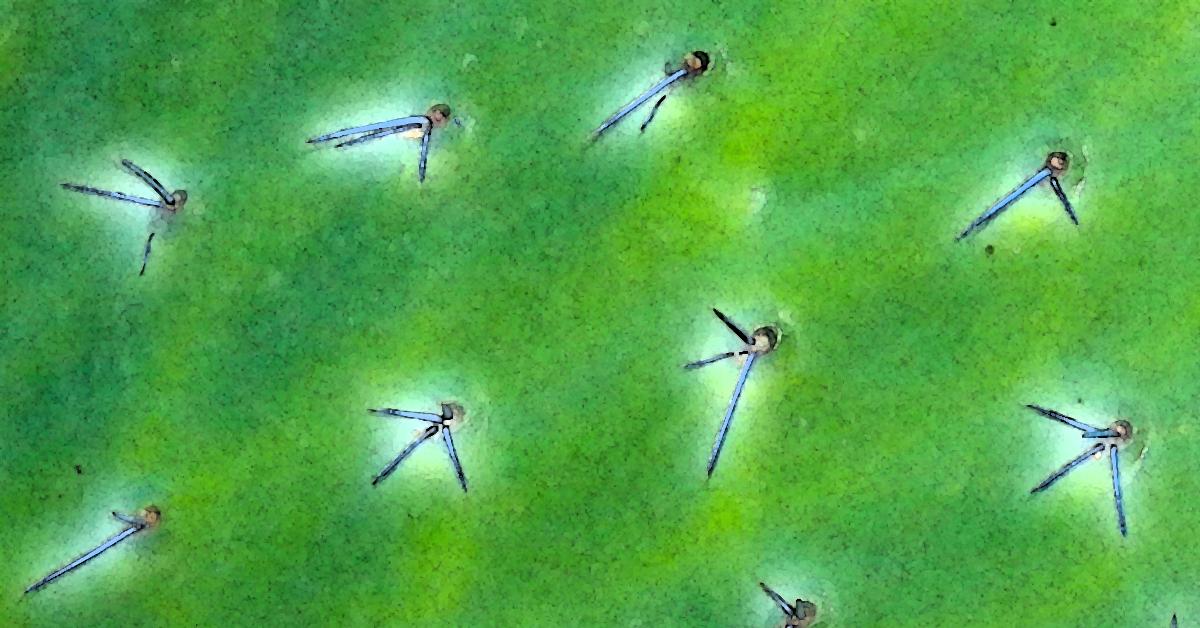 Ice Needle Cactus 1200x628