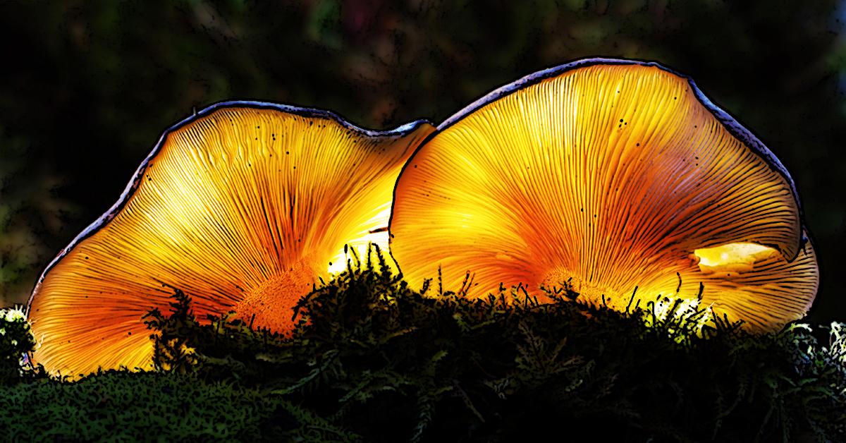 Night Light Fungus 1200x628