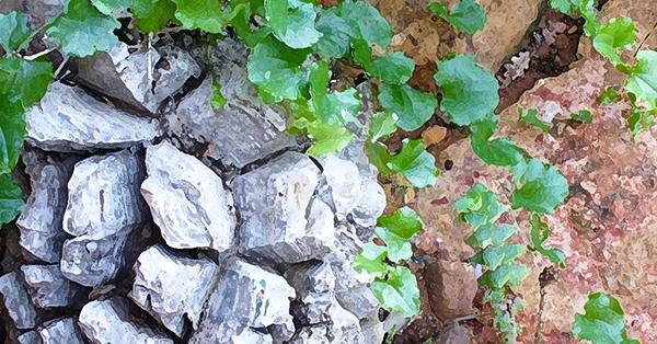 Stone Root 600x314